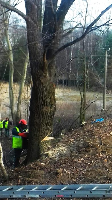 Kácení a ořezy stromů