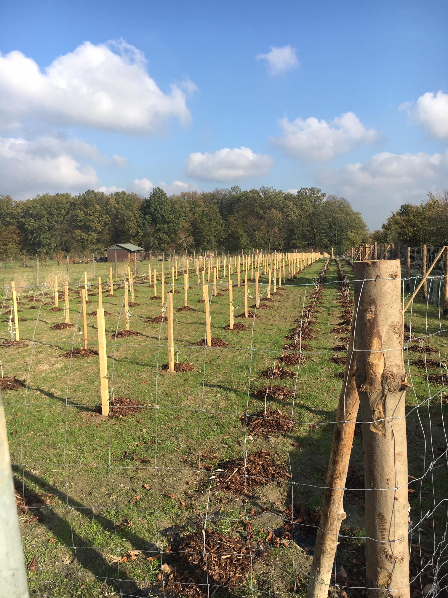 Vybudování biokoridoru v obci Bolatice